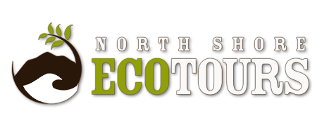 Hawaii Spirituality - North Shore Eco Tours Hawaii | North